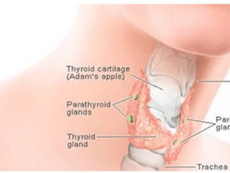 Thyroid in Hindi