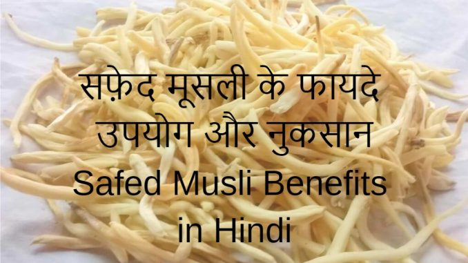 safed musli benefits in hindi